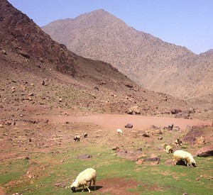North Africa's highest football pitch