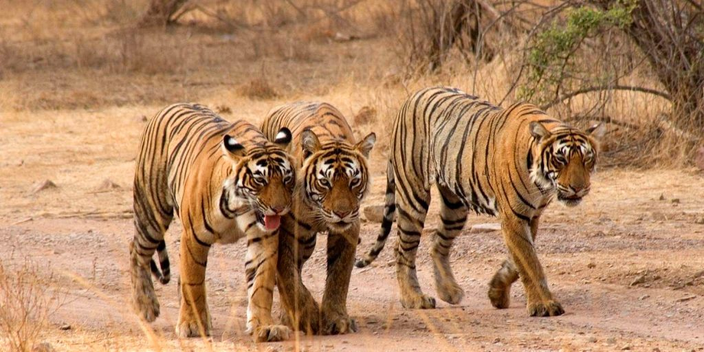 i-escape blog / Just back from Jaipur and Ranthambhore National Park