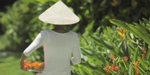Fusion Maia Vietnam