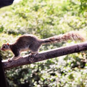 i-escape: squirrel