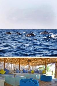 i-escape: Dolphin Beach, Sri Lanka