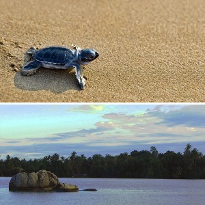 i-escape: turtle watching