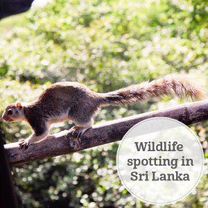 The i-escape blog / Wildlife spotting in Sri Lanka