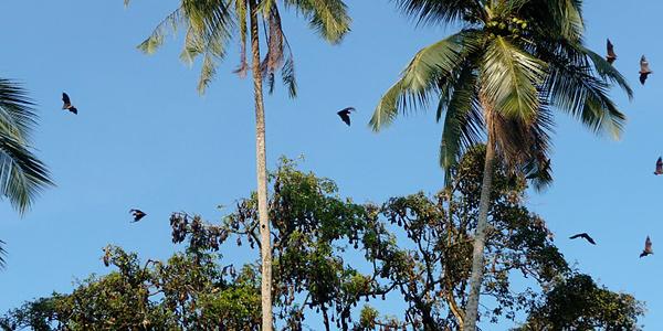 Wilpattu, Sri Lanka