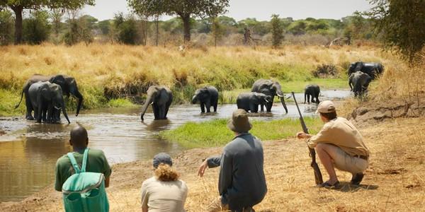 i-escape: Oliver's Camp, Tanzania
