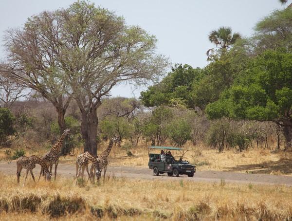 i-escape: Tanzania Safari