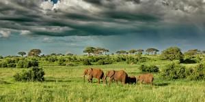 i-escape: Tanzania