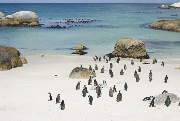 i-escape blog / Boulders Beach