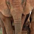 Family-friendly South African safaris