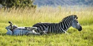 i-escape: Karkloof Safari Spa, South Africa