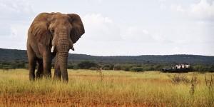 i-escape: Madikwe, South Africa