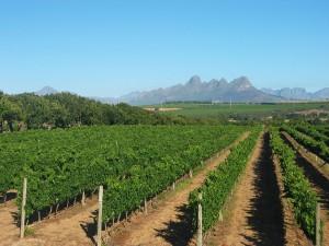 i-escape blog / Cape Winelands