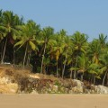 Insider's guide to Kerala