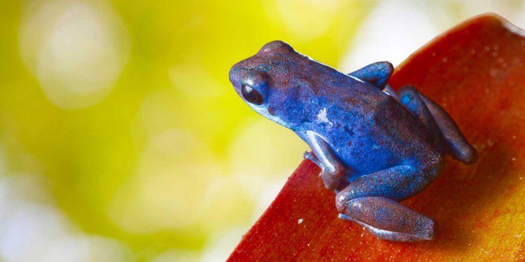 i-escape blog / Family wildlife holidays Costa Rica