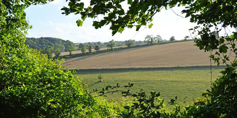 i-escape blog / Cranborne UK