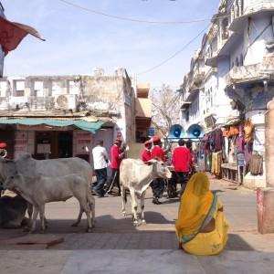 i-escape blog / Rajasthan