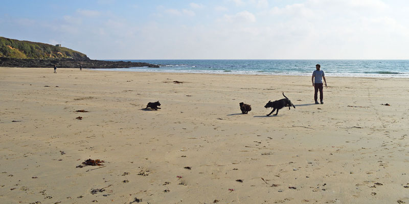 i-escape blog / Just back from dog-friendly hotels Cornwall / Porthcurnick Beach, Cornwall