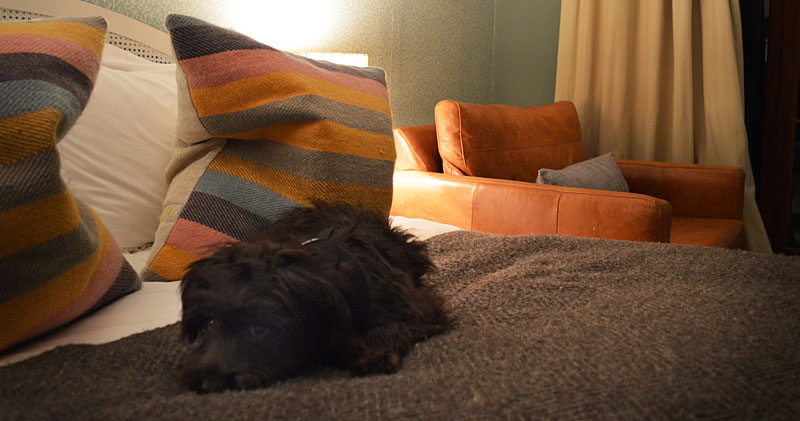i-escape blog / Just back from dog-friendly hotels Cornwall / The Rosevine, Cornwall