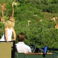 Tailor-made Tours: Family Itineraries