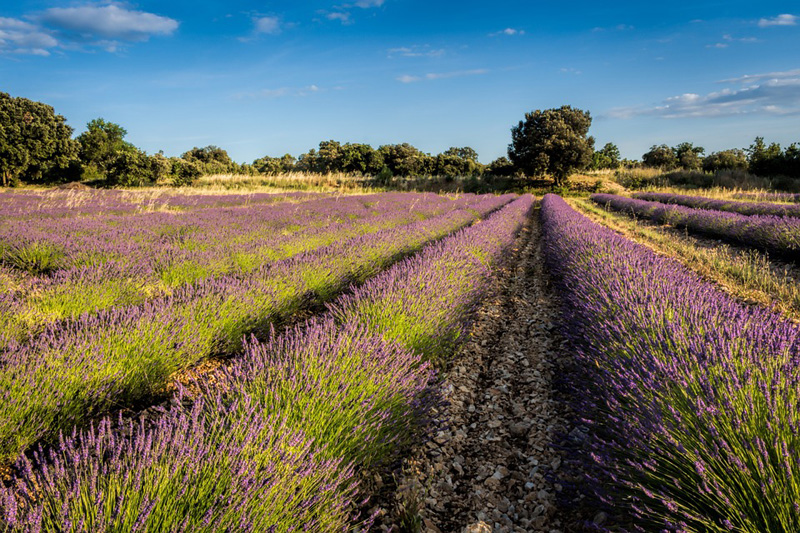 The i-escape blog / Fabulous French road trips / Languedoc & Provence