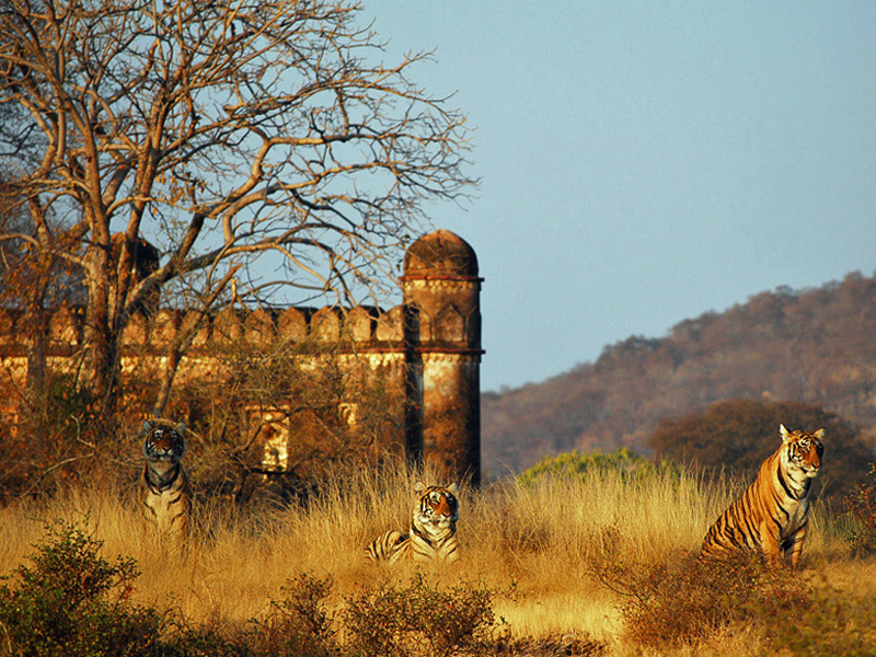 i-escape blog / Tailor-made Tours Northern India / Ranthambhore National Park