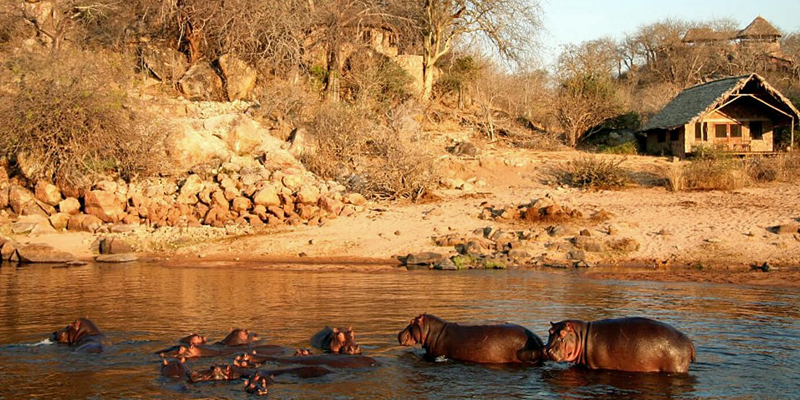 i-escape blog / Tailor-made Tours Southern Tanzania / Hippo