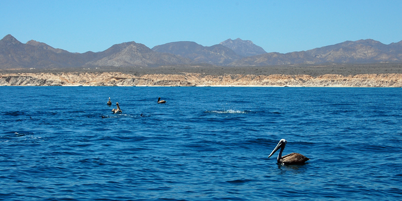 i-escape blog / 5 Favourite Family Havens in Mexico / Cabo Pulmo Marine Park