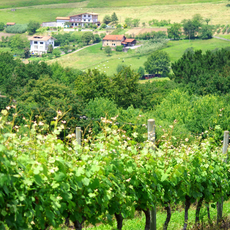 i-escape blog / Budget-friendly foodie trips to the Basque Country / Txakoli vinyards