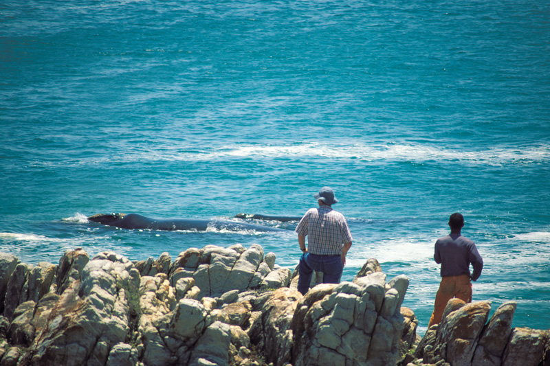 i-escape blog / Summer long-haul destinations / Grootbos, Hermanus, South Africa