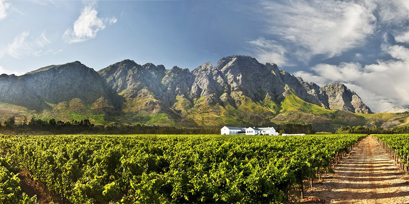 The i-escape blog / Top tips for South Africa's Cape Winelands and West Coast / Holden Manz Wine Estate