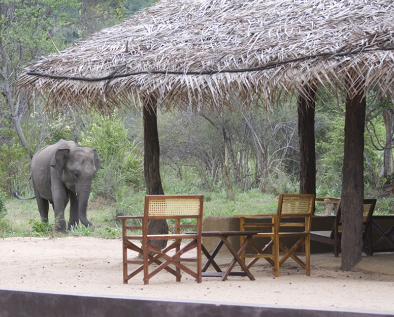 The i-escape blog / Adults-only holidays: save and splurge / Tree Tops Jungle Lodge
