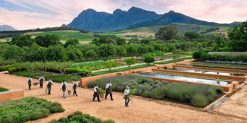 i-escape blog / 6 Family-friendly Foodie Places to Stay / Babylonstoren
