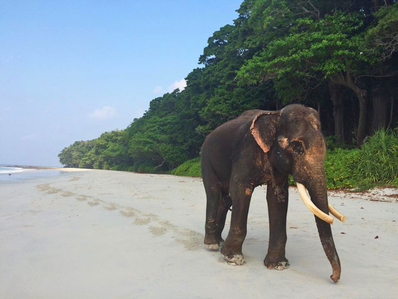 The i-escape blog / Our favourite beaches in the world / Andaman islands