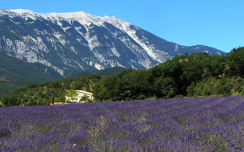 the i-escape blog / our favourite holidays by Eurostar / Lavender fields in Provence ©Robert Brink
