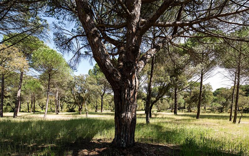 the i-escape blog / a portuguese road trip / sublime comporta