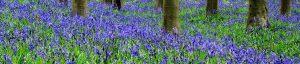 the i-escape blog / 5 of our favourite springtime getaways / bluebells