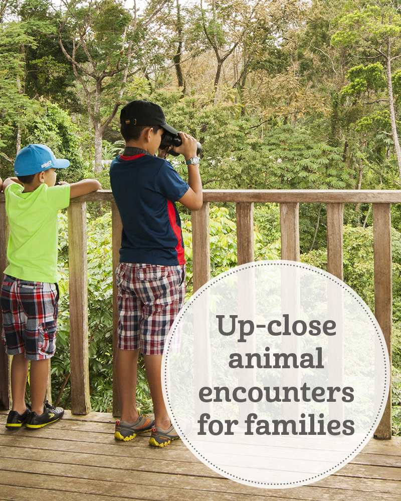 the i-escape blog / Up-close animal encounters for families