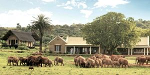 The i-escape blog / 6 lodges with wildlife on your doorstep / Gorah Elephant Camp South Africa