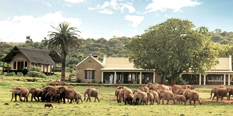 The i-escape blog / 6 lodges with wildlife on your doorstep / Gorah Elephant Camp South Africa