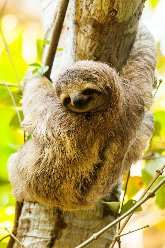 The i-escape blog / 6 lodges with wildlife on your doorstep / Sloth at Lapa Rios Ecolodge Costa Rica