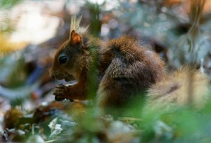 the i-escape blog / European holidays with amazing wildlife / Red squirrel