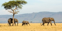 the i-escape blog / Planning an African Safari Honeymoon: 5 wildly romantic destinations