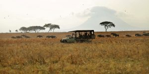 The i-escape blog / 6 lodges with wildlife on your doorstep / Game drives in Tarangire National Park