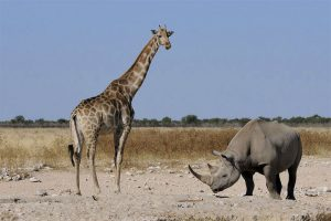 the i-escape blog / Planning an African Safari Honeymoon: 5 wildly romantic destinations / Giraffe and rhino