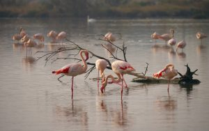 the i-escape blog / European holidays with amazing wildlife / Flamingos in the Camargue