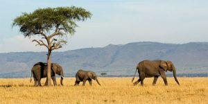 the i-escape blog / Planning an African Safari Honeymoon: 5 wildly romantic destinations / Tanzania