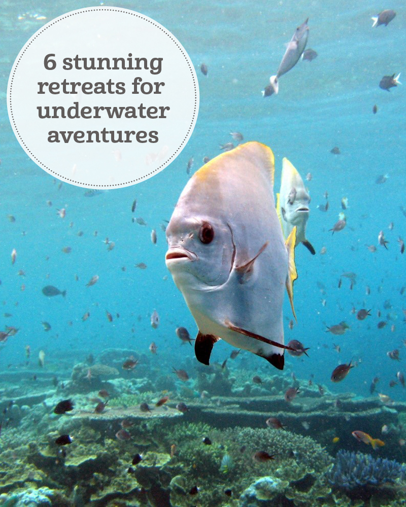 the i-escape blog / 6 stunning retreats for underwater adventures