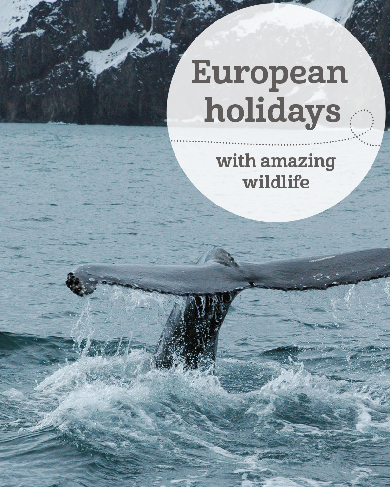 The i-escape blog / European holidays with amazing wildlife