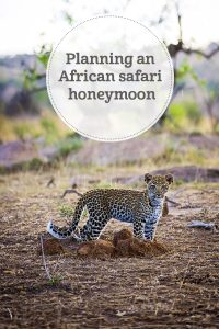 the i-escape blog / Planning a Honeymoon: 5 Reasons Harry and Meghan Should choose an African Safari