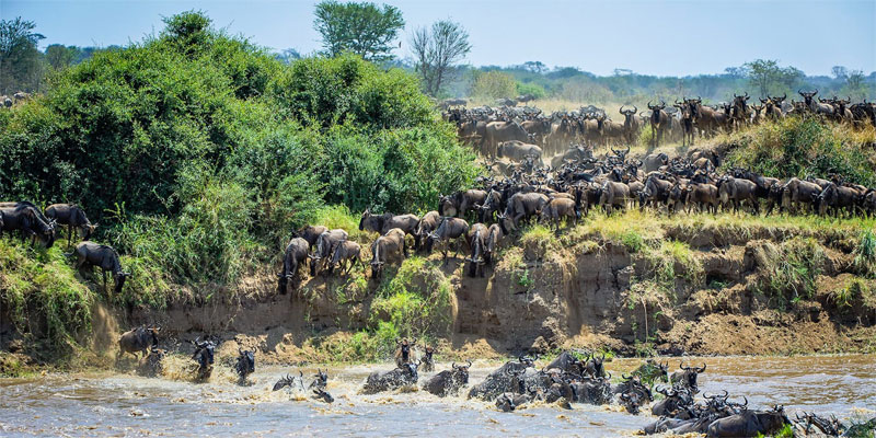 the i-escape blog / the i-escape blog / Africa safari honeymoons: 5 romantic places Harry and Meghan should go / The Great Migration